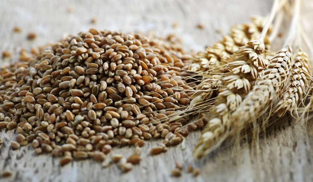Заговор на зерно пшеницы