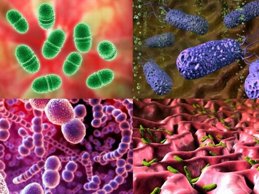 Возникновение микробов