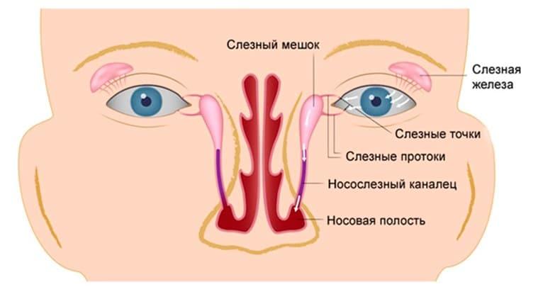 Схема расположения слезного канала