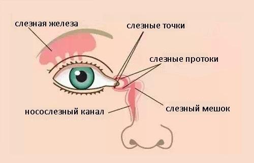 Строение слезного канала