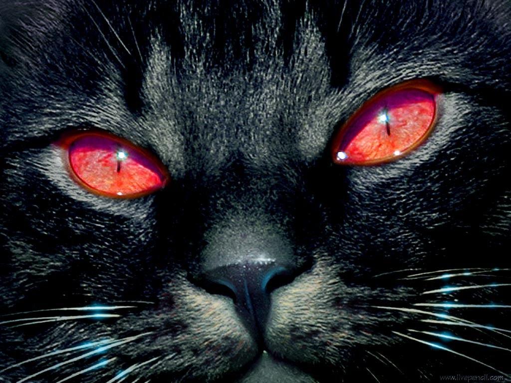 Красные глаза у животных